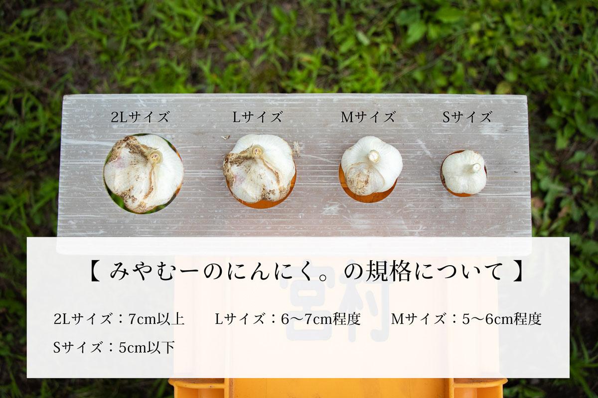 みやむーのにんにく「匠」800g。化学肥料を抑えた農薬不使用のにんにくです。
