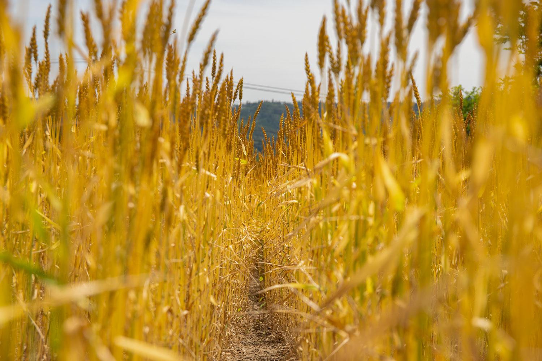 みやむーの小麦粉