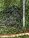 Wood(木製)ランディングネット54cm