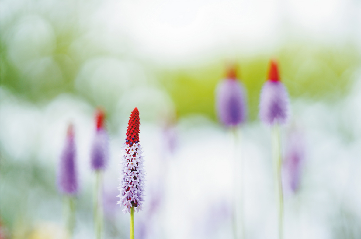 カメラマン 2022カレンダーシリーズ 05 並木 隆「flowers of our seasoning...」