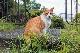 カメラマン 2022カレンダーシリーズ 06 西沢千晶「Et un chat nomme les proches〜そして親戚という名の猫〜」