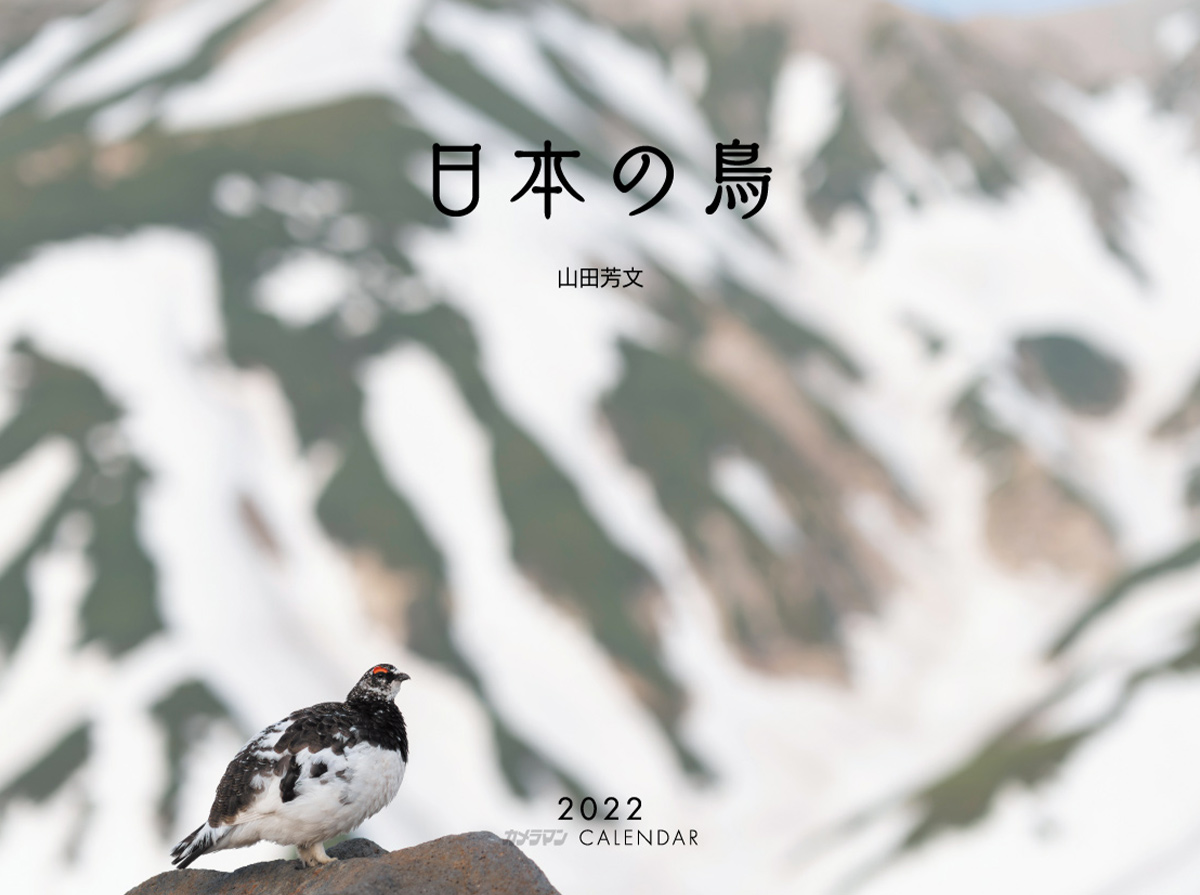 カメラマン 2022カレンダーシリーズ 11 山田芳文「日本の鳥」