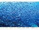 カメラマン 2021カレンダーシリーズ 16 清水淳 「UNDER WATER PHOTOGRAPHER」