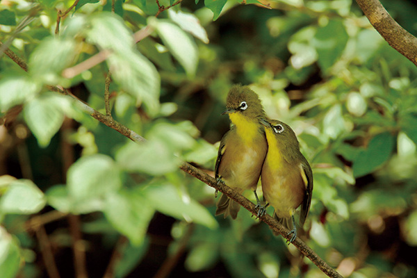 カメラマン 2021カレンダーシリーズ 19 戸塚学 「Oh My Little Birds」