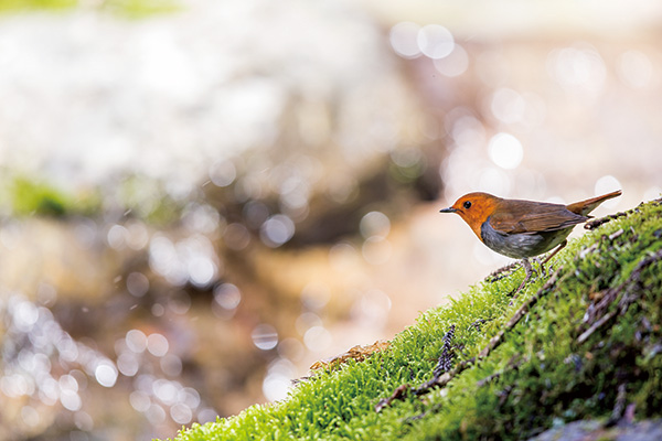 カメラマン 2021カレンダーシリーズ 25 水中伸浩 「Art Of Wildbird」