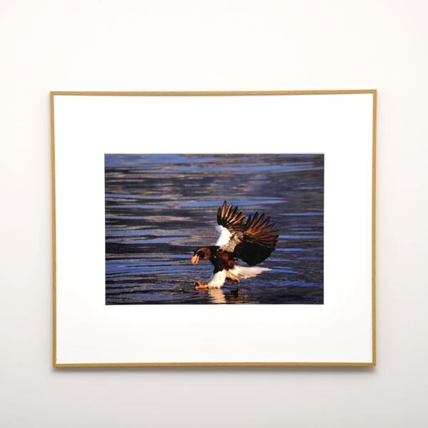 WEBカメラマン オリジナル作品額装セット 06 戸塚学 「鷹と鷲・孤高の野鳥」
