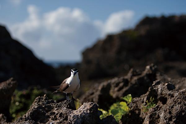 カメラマン 2021カレンダーシリーズ 28 山田芳文 「日本の鳥」