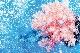 カメラマン 2022カレンダーシリーズ 02 清水 淳「UNDER WATER PHOTOGRAPHER」