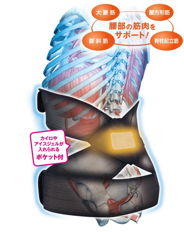 骨盤・姿勢 体幹筋サポーター