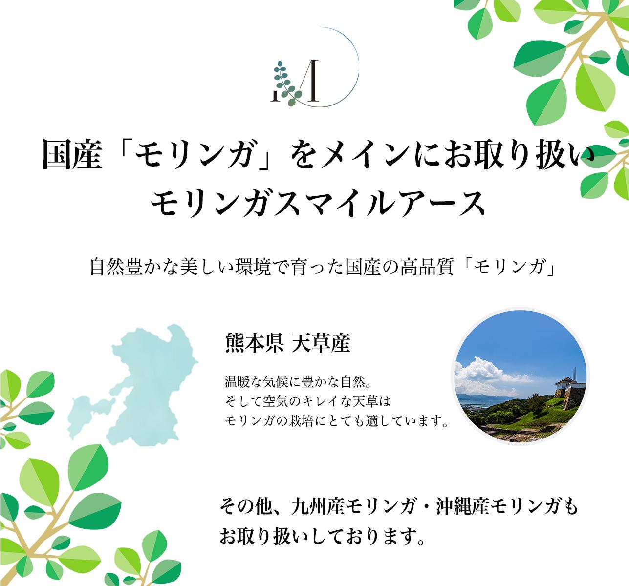 天草産100%モリンガハーブティー(3袋)