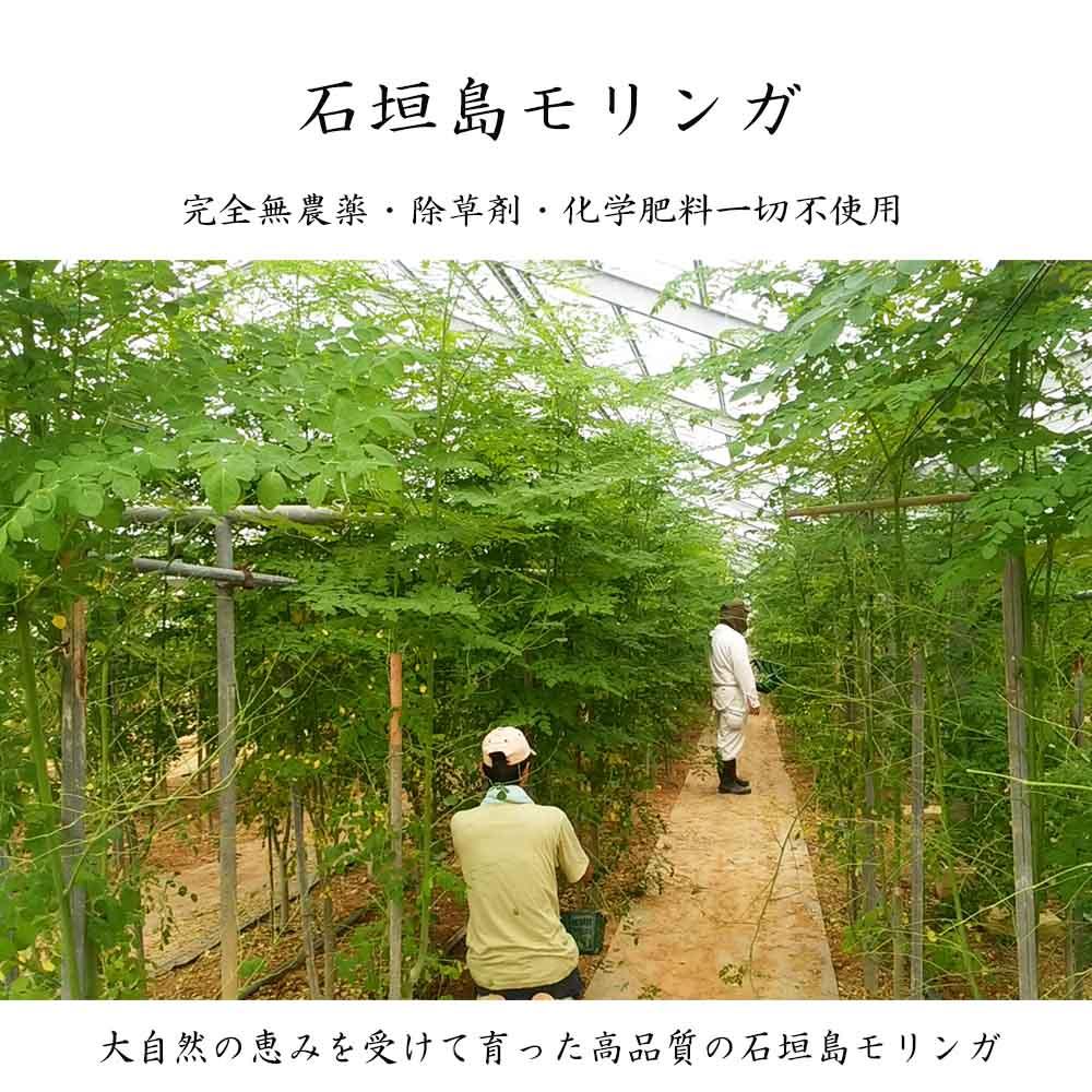 沖縄・石垣産 モリンガの生葉(1kg)