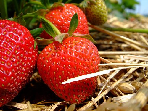 【通常商品と定期購入商品】イチゴ