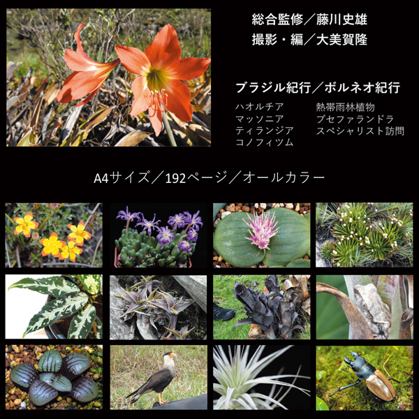 World Plants Report ex Japan ワールドプランツレポート植物 多肉植物 熱帯雨林植物 World plants 本