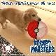 ポケモン ジャンプ モンスターボール S 犬 フリスビー ソフト 折りたためる 犬 玩具