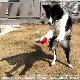 ポケモン ペット用玩具 モンスターボール  スーパーボール ハイパーボール マスターボール 犬 猫 おもちゃ ボール
