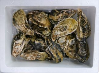 殻付き牡蠣 2�