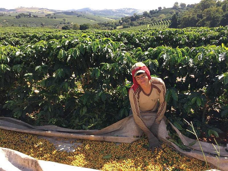 【注文後焙煎だから鮮度抜群】 ブラジル カッシャンブー農園 250g ※テイストオブハーベスト