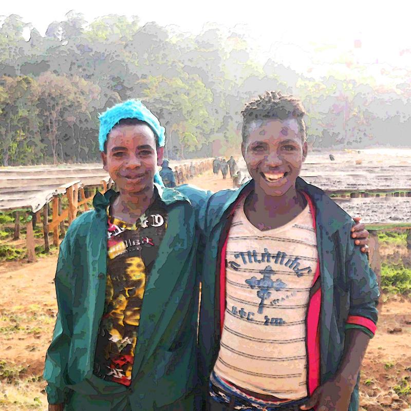 エチオピア ゴチチ サンドライ イメージ