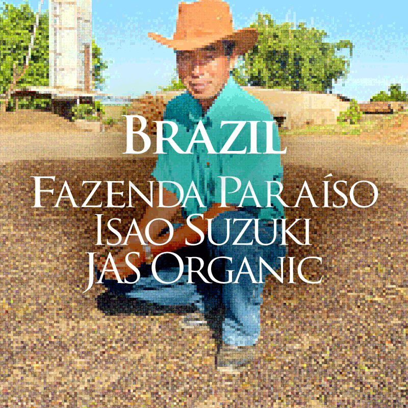 【注文後焙煎だから鮮度抜群】 ブラジル パライーゾ農園 鈴木功さんの有機珈琲 250g