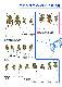 月刊むし・昆虫図説シリーズ13 日本のコブヤハズカミキリ