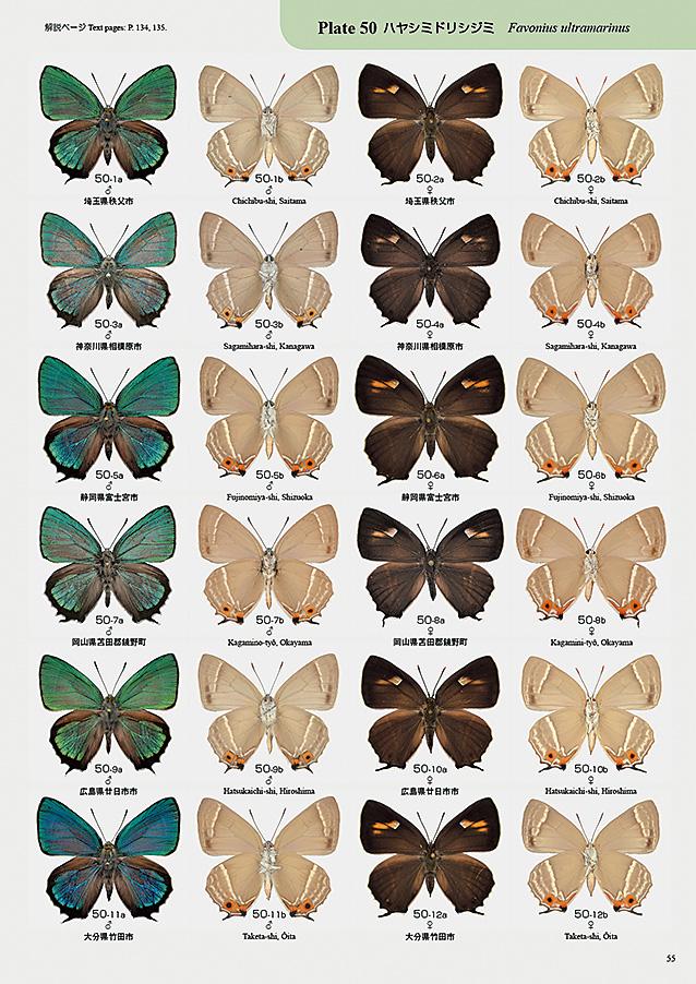 月刊むし・昆虫図説シリーズ14 日本のゼフィルス