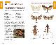 季節ごとに探せる! 高尾山の昆虫430種!