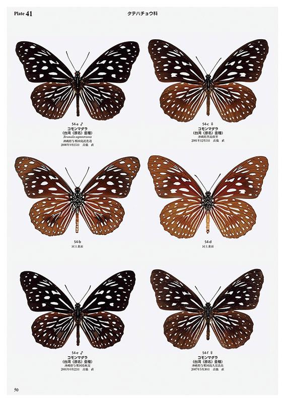 日本の迷蝶大図鑑