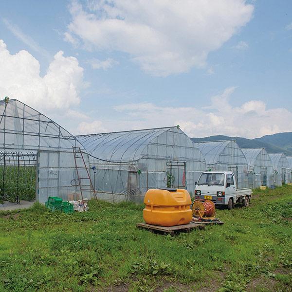 雲の上のトマトトマトジュースセット 500ml×3本セット 送料込(沖縄 ...