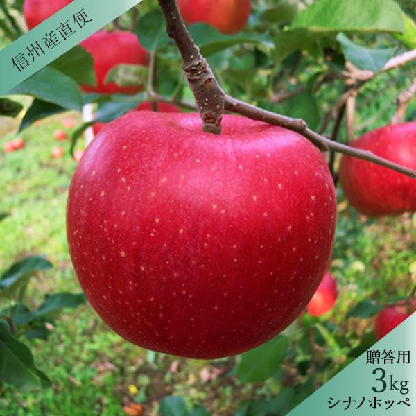 【販売は終了しました】りんご シナノホッペ 秀 贈答用3kg(7〜12玉) 送料込(沖縄別途590円) ※11月上旬以降、順次発送。天候や収穫状況により遅れる場合があります。