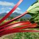 サンフレンド農園 真っ赤なルバーブ 八ヶ岳 ルビー ジャム 2個セット 送料込(沖縄別途240円)