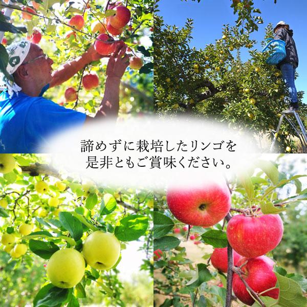 【復興林檎/塚田農園】サンふじ 家庭用 10kg(ばら詰め/大小25玉以上)