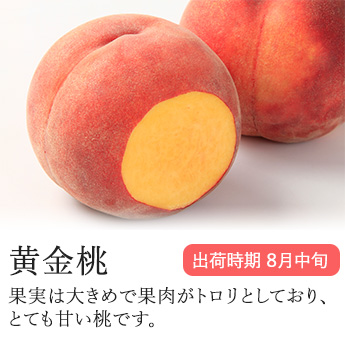 【信州産直便】 桃 もも 黄金桃 贈答向け 3kg 8〜13玉入り 送料込 沖縄県・離島地域配送不可