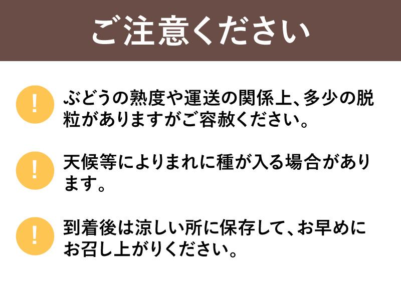 【信州産直便】 シャインマスカット 2房 約550g×2房 送料無料 (沖縄県・離島地域配送不可) ご注文から2週間〜3週間で発送いたします。 ※農産物のため、収穫状況によって発送が遅れる場合がございます。