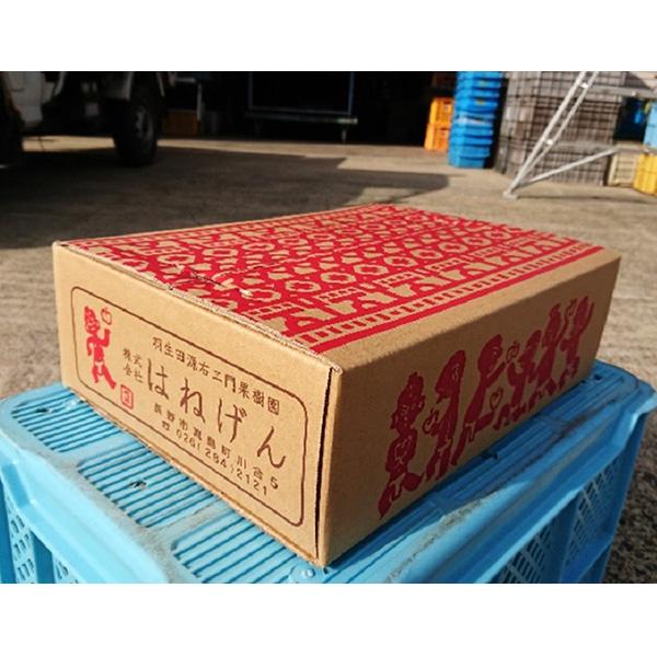 りんご シナノドルチェ 3kg 7〜11玉 送料込(沖縄別途590円)
