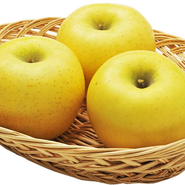 【販売は終了しました】りんご シナノゴールド 秀 贈答用3kg(7〜12玉) 送料込(沖縄別途590円) ※10月中旬以降、順次発送。天候や収穫状況により遅れる場合があります