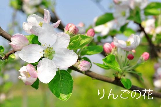 北いわてのはちみつ りんご蜜