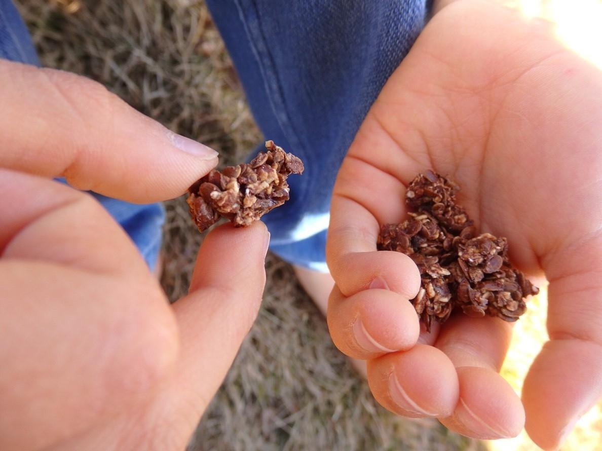 かりかり発芽フラックス チョコ風味 150g×5  (超ヘルシーな発芽亜麻仁スナック )
