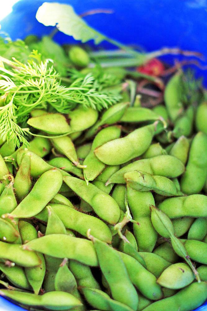 自然栽培 枝豆 えだまめ (無農薬・無肥料・岡山県産)