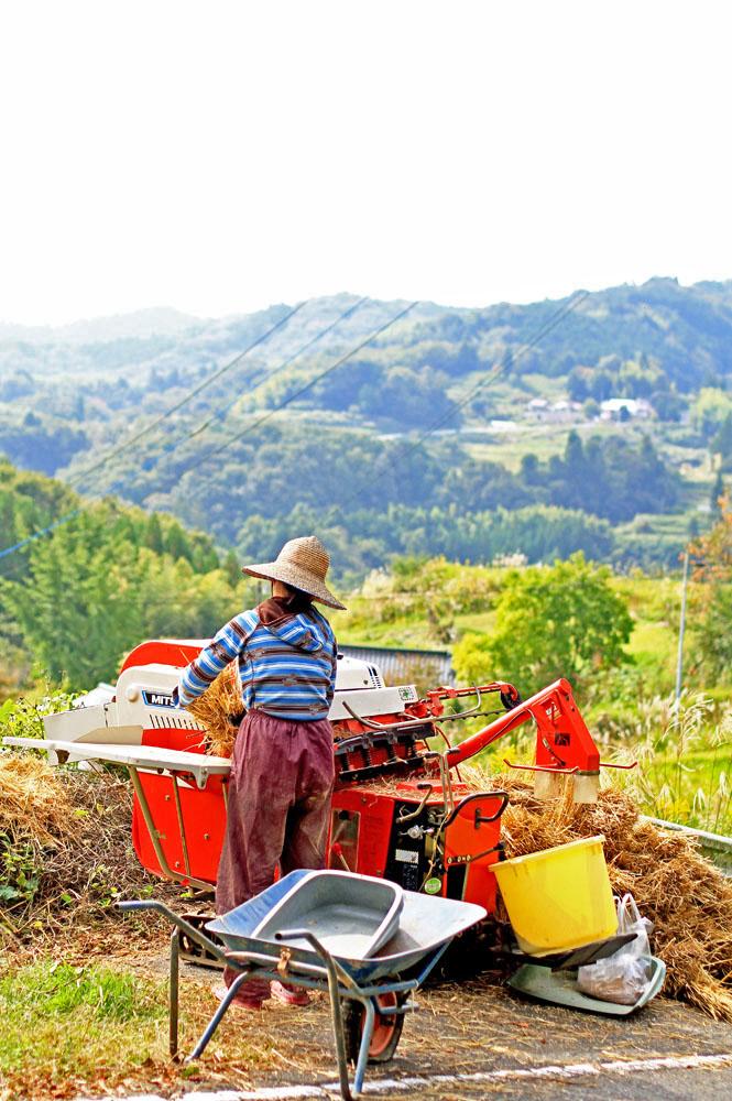 自然栽培 きぬむすめ玄米 1kg (無農薬・無肥料・岡山県産)