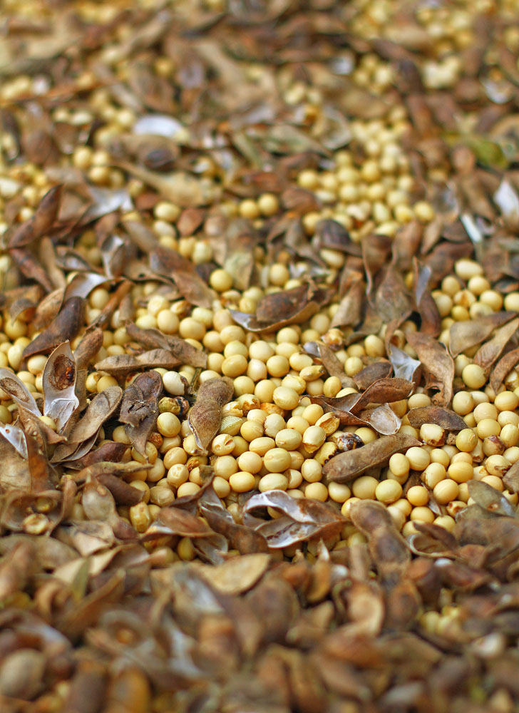 白大豆 (自然栽培・天日干し/岡山県産)
