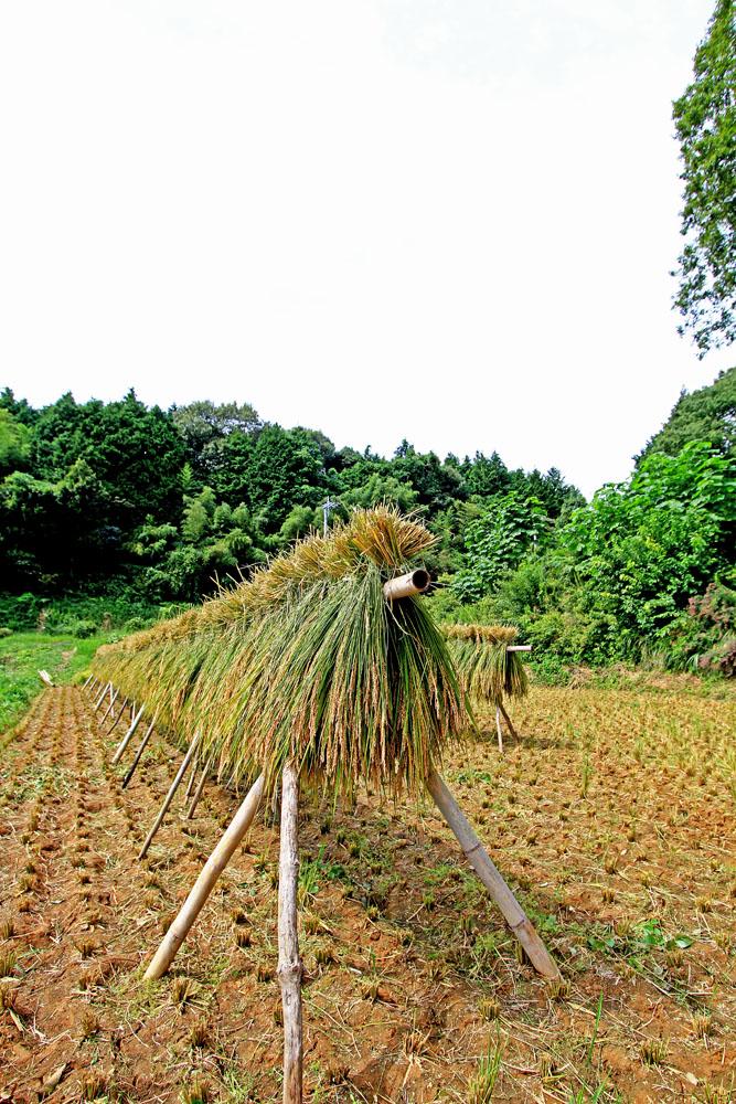 自然栽培・ササニシキ (玄米・岡山県産)