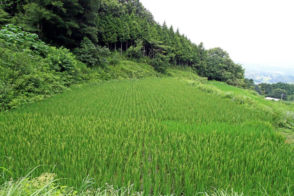 自然栽培・あきたこまち (玄米/五分つぎ米・岡山県産)