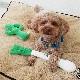ユニークで美味しそうな犬のおもちゃ|スクィーキー ナガネギ
