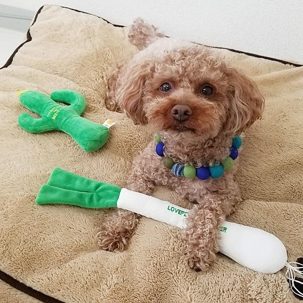 【大人気】犬 おもちゃ ペットトイ 音が鳴る 遊ぶ ストレス解消【 LOVE PETS by BESTEVER ラブペッツ バイ ベストエバー 】サボテン さぼてん