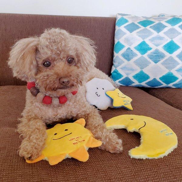 【おやつ ポケット付】犬 おもちゃ ペットトイ 音が鳴る 遊ぶ ストレス解消 噛みやすい【 LOVE PETS by BESTEVER ラブペッツ バイ ベストエバー 】Thin & Chewy 月 ムーン 三日月 Moon