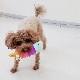 犬のおもちゃ|スクィーキー アイスのぬいぐるみ チョコミントベリー