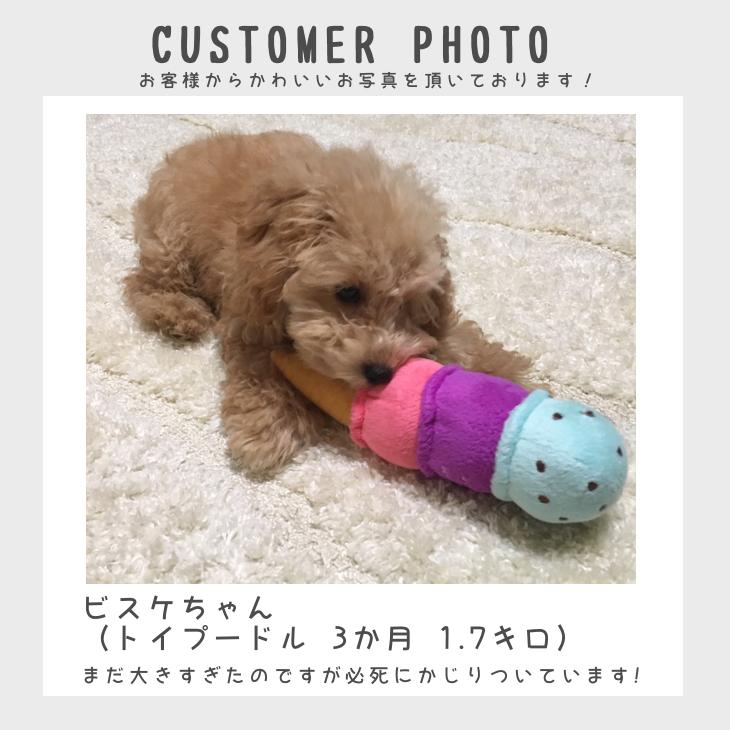 【送料無料 3点セット 】犬 おもちゃ 犬用のおもちゃ | 自分で選べる!犬用おもちゃのお試しセット