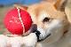 犬のおもちゃ|スクィーキー けん玉のぬいぐるみ