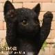 リアルなネコの置物 お願いキャット 3 ブラック くろねこのフィギュア 黒猫オブジェ◇お部屋のインテリアにお庭のオーナメントとしても♪