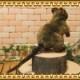 リアルな動物のぬいぐるみ クアッカワラビー アニマルオブジェ カンガルー グッズ 置物 インテリア
